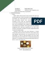 Laporan Praktikum Kimia Industri Revisi