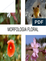 Aula. Morfologia Floral