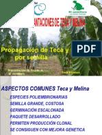 PROPAGACIÓN DE TECA Y MELINA POR SEMILLA E.Trujillo El Semillero.pdf