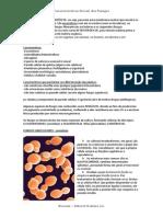 Carafungoscterísticas Gerais Dos Fungos - RESUMO