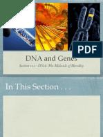 DNA and Genes Presentation - Biology Chapter 11