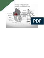 Info Ppt Cardio