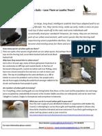 Urban Gulls - For Steve.pdf