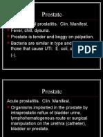 prostate path