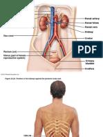 Urinary Pics A