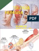 Histologia Humana Final