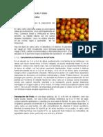 Caracteristicas y Uso del fruto de camu camu