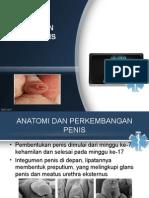 7. Fimosis Dan Parafimosis