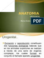 urogenital.pptx