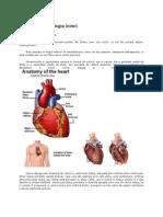 Anatomia si fiziologia inimii.docx