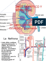 Clase Sindromes Nefrítico y Nefrótico