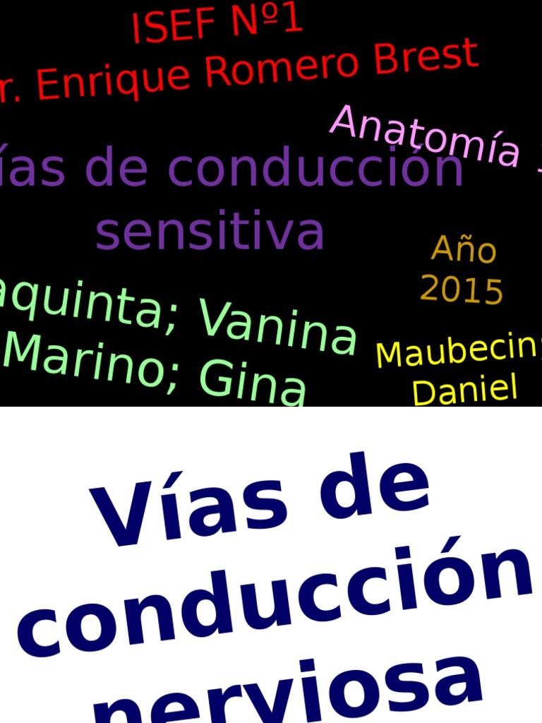 TP2 - Vias Conduccion Sensitivas - Anatomia.ppsx
