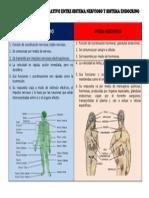 Cuadro Comparativo Entre Sistema Nervioso y Sistema Endocrino