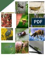 Kartice za prepoznavanje insekata