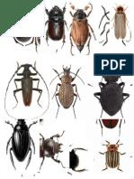 Kartice sa slikama insekata 2.deo