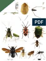 Kartice sa slikama insekata 3. deo
