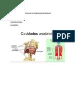 Nº6 GUIA (Anatomia Basica 2)