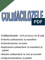 Dicag in Ccolibacilozele Macmiferelor