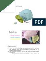 Anatomia Temporal
