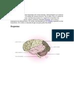 Definición de Cerebro