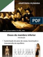 Medicina -  Membros Inferiores - Ossos e Articulações e Plexo Lombossacral