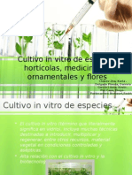 Expo Vegetal Plantas