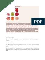 Taxonomia y Morfologia