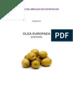 Mercado de Exportación de la Aceituna