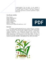 O Gengribre Manual Técnico (2)