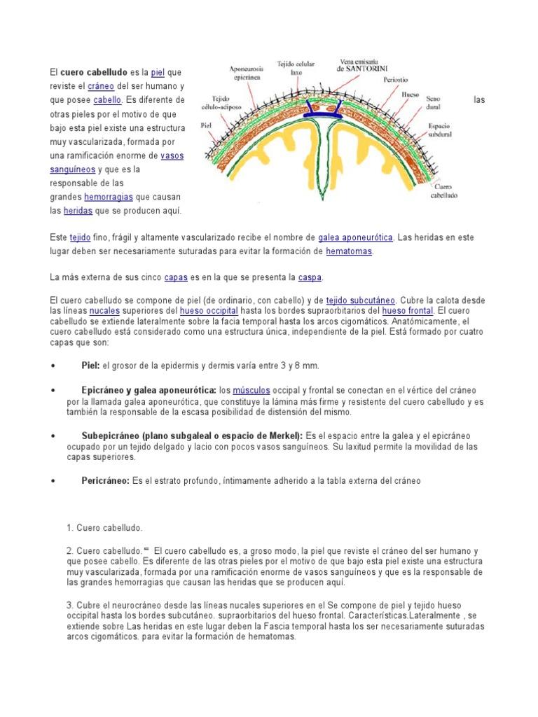 Contemporáneo Anatomía Del Cuero Cabelludo Elaboración - Imágenes de ...
