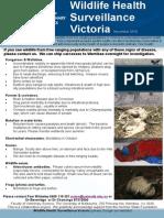 Wildlife Newsletter 02