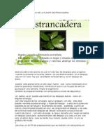 Las Características de La Planta Destrancadera