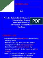 Power Ponit Cerebellum