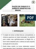 A Produção de Ovinos e o Melhoramento