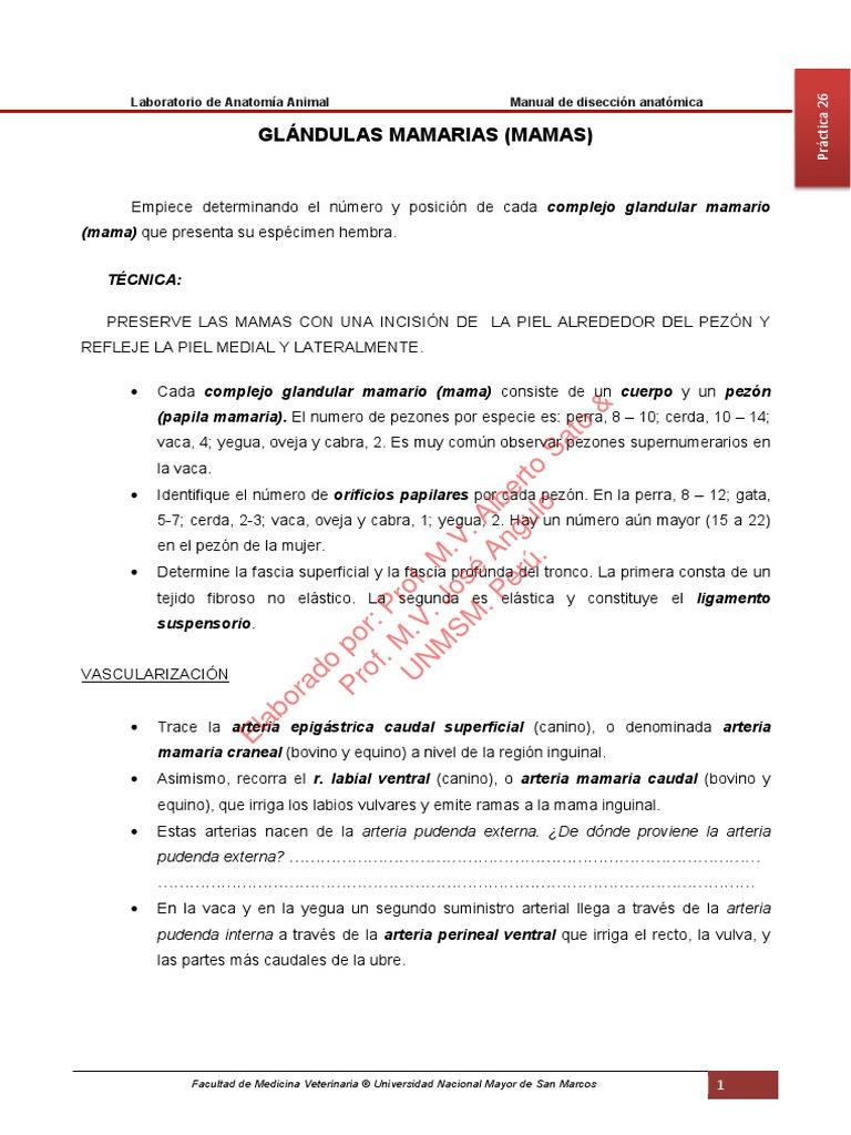 MANUAL DE DISECCIÓN DE ANATOMÍA ANIMAL. GLÁNDULAS MAMARIAS (MAMAS)