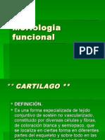 Morfologia Funcional Principios
