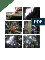 Biodiversidad Fotos