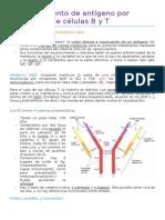 4 Reconocimiento de antígeno por receptores de células B y T (Pri).docx