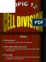 c3 Cell Division