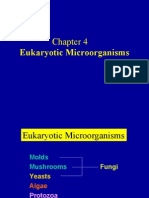 Chapter 4 Eukaryotic Microorganisms