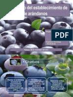 Arandanos IX Chile