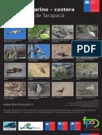 Afiche Aves IV chile norte