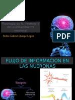 Fisiología de La Neurona y Del Microambiente Neuronal