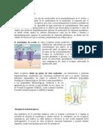 Receptores ionotrópicos