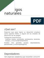 Enemigos naturales.pptx