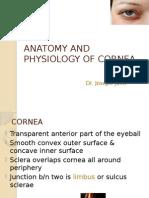 CORNEA Anatomy h