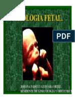 Fisiologia Fetal