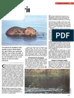 Castorii.pdf