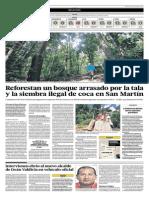 Portafolio - 30-06-20145 - Reforestan bosque deforestado por la tala de coca en San Martin.pdf