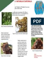 Poster Regiunea Ecuatoriala
